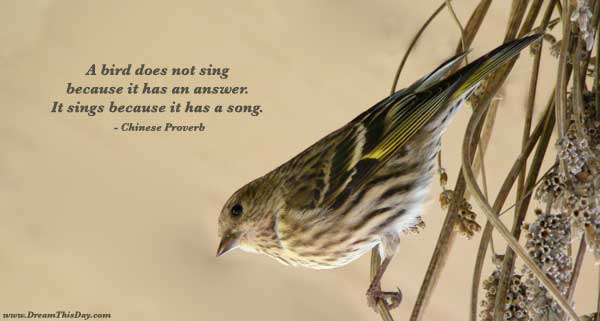 Bird_Quotes http://www.dreamthisday.com/quotes-sayings/bird/
